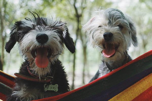 dogs in bed boarding