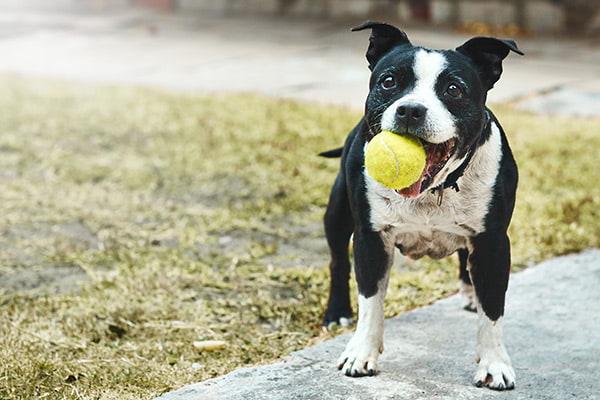 image-dog-daycare-2
